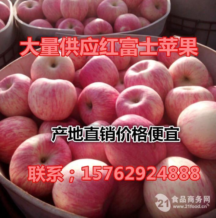 山东冷库红富士苹果价格行情
