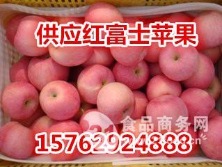全国各个产区红富士苹果批发价格