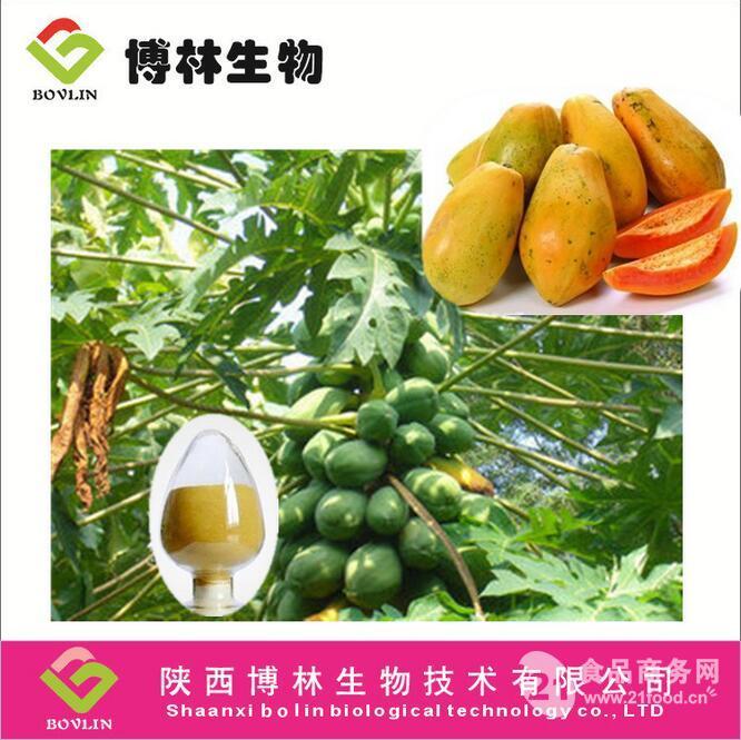 优质木瓜叶提取物 女性天然丰胸原料粉 5:1 10:1 20:1,质优价廉