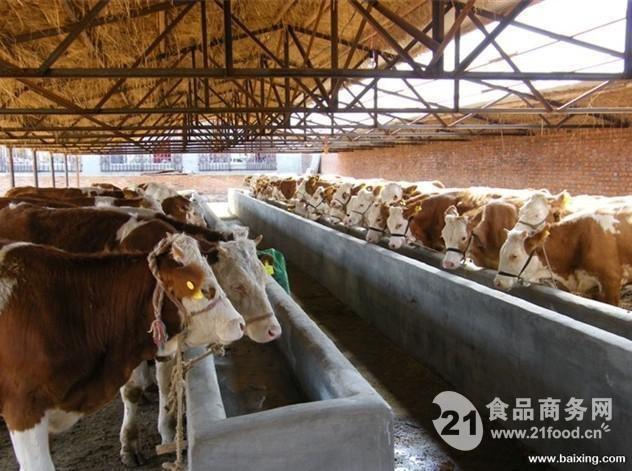 山西省肉牛养殖_夏洛莱肉牛养殖场_山西省__牛-食品商务网