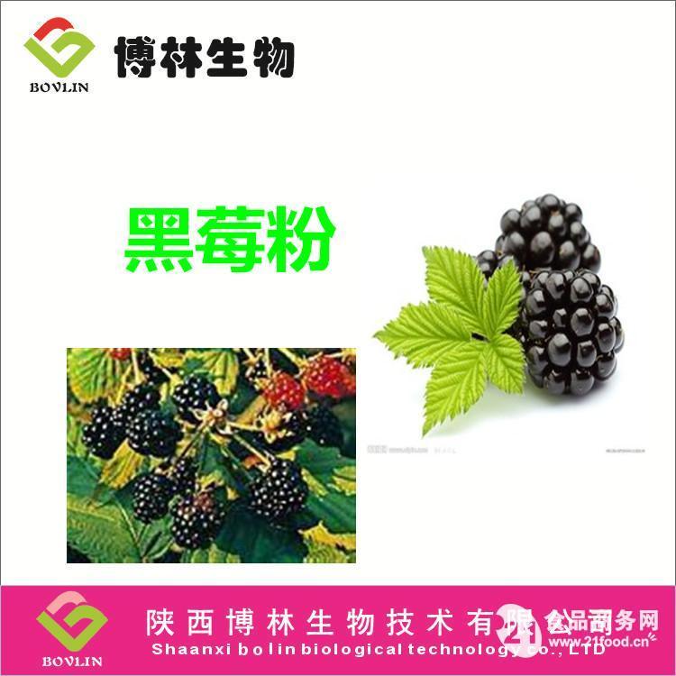 黑莓粉 黑莓粉原料 黑莓提取物 植物提取物