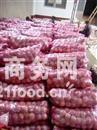 陕西膜袋红富士苹果销售价格