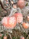 供应红富士苹果价格 膜袋红富士苹果多少钱
