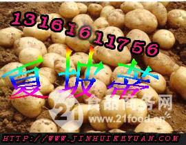 夏波蒂土豆种子