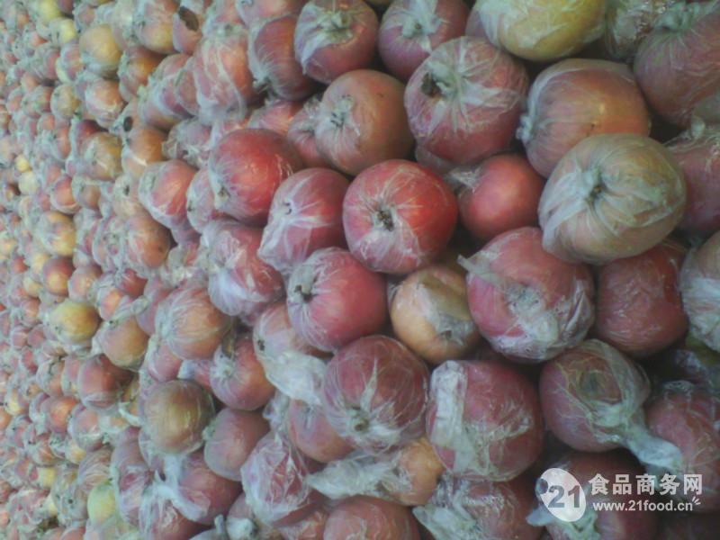 山东冷库苹果种植基地