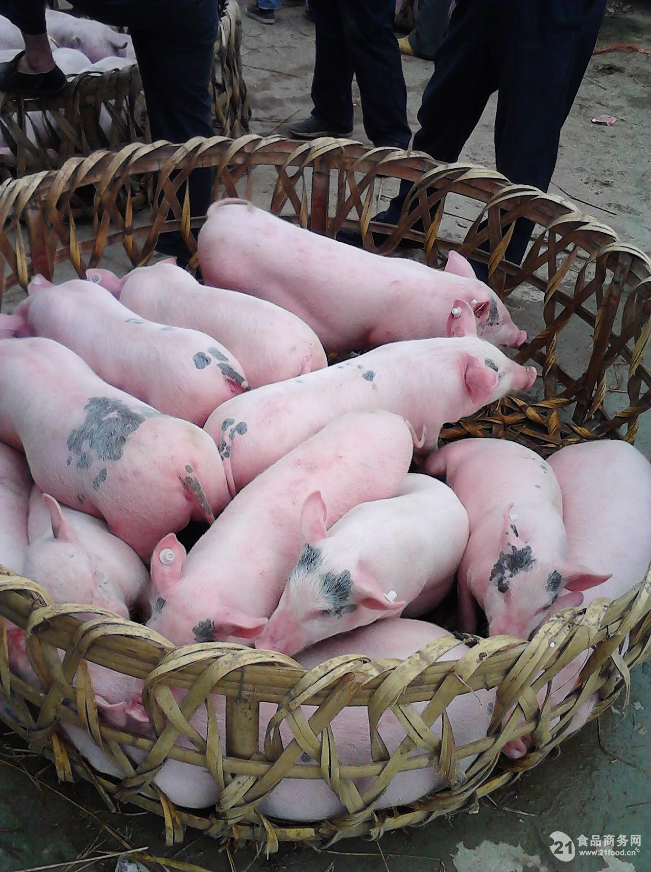 动物养殖备案表