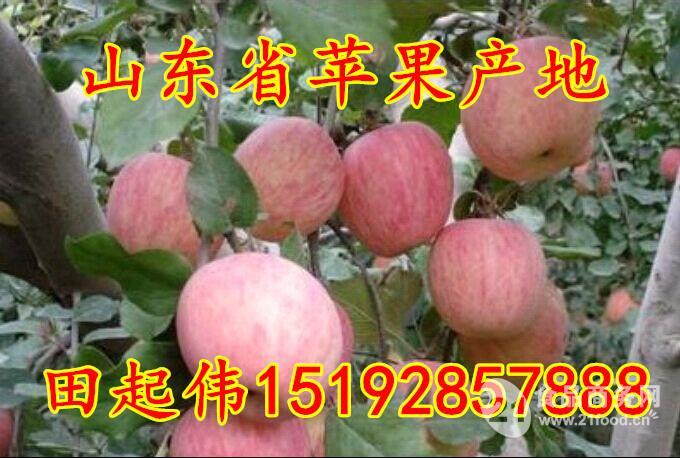 红富士苹果市场价格