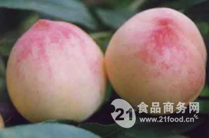 山东油桃供应