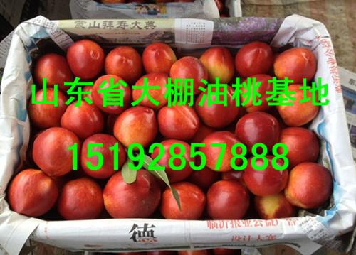 今日大棚油桃*价格、山东油桃市场行情