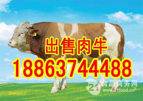 肉牛牛苗多少钱一头