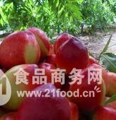 陕西油桃批发价格