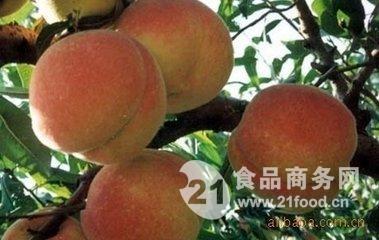 陕西郑三毛桃产地/郑三毛桃价格