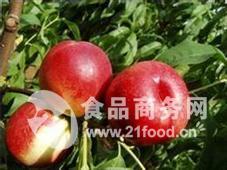 陕西油桃价格,陕西油桃基地