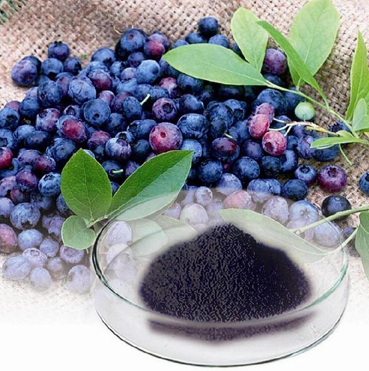 蓝莓提取物 花青素25%