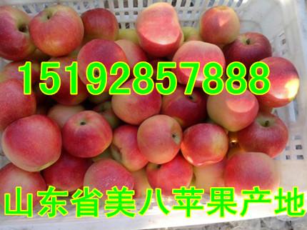 山东省美八苹果*批发价格