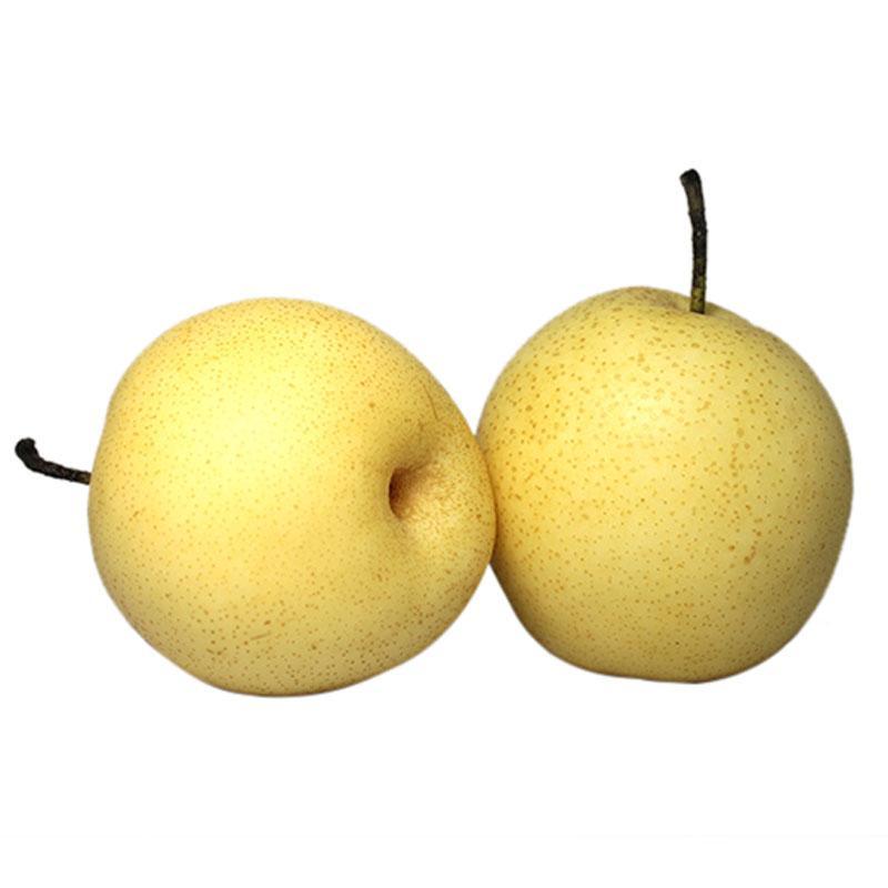 黄金梨批发