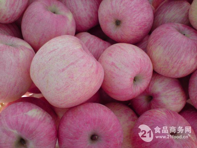 山东精品红富士苹果代理价格山东苹果销售价格