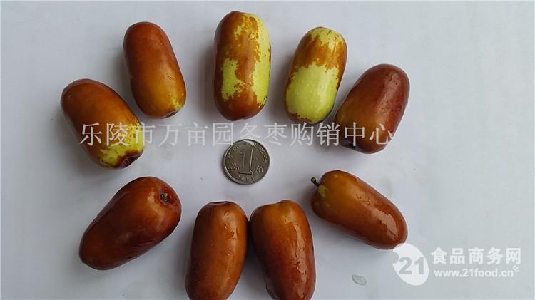 乐陵鲜长红枣