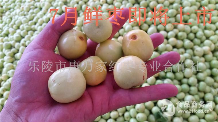 鲜梨枣产地