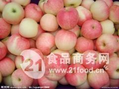 山东省美八苹果产地价格