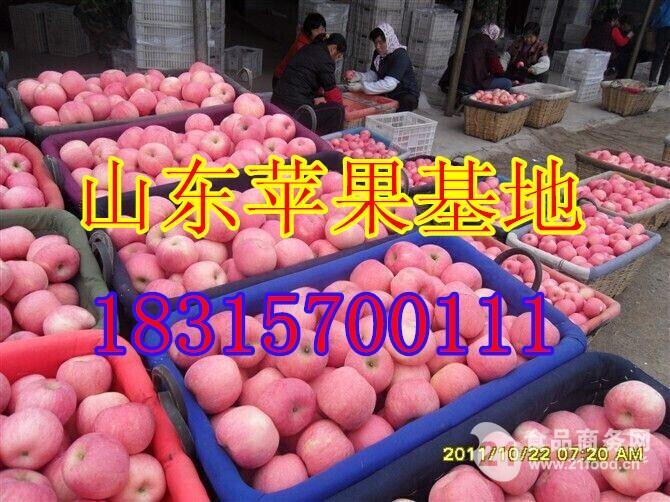 -山东红富士苹果低价批发规格75-100