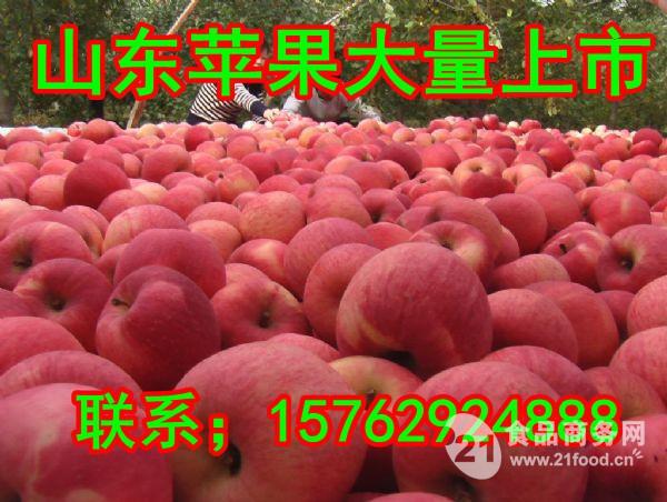 山东嘎啦苹果价格批发