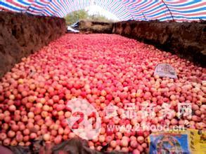 红富士苹果价格产地批发价格查询详细