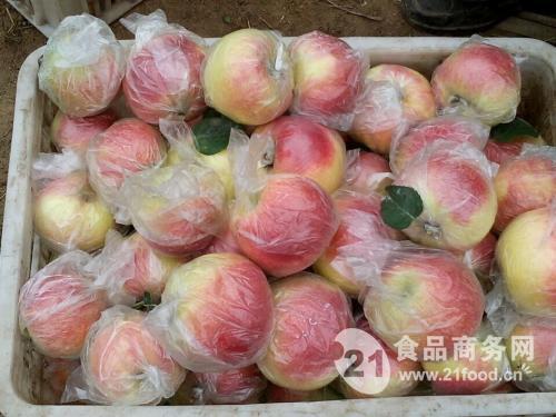 山东红富士苹果价格产地