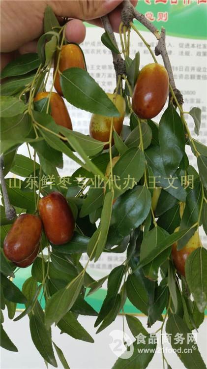 鲜长红枣批发收购价格
