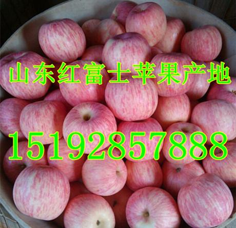山东苹果价格 红富士苹果价格