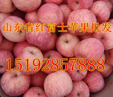 山东冷库苹果价格