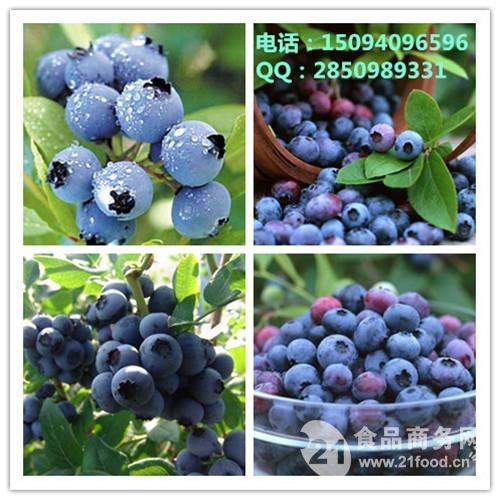 蓝莓速溶粉   原汁原味口味纯正