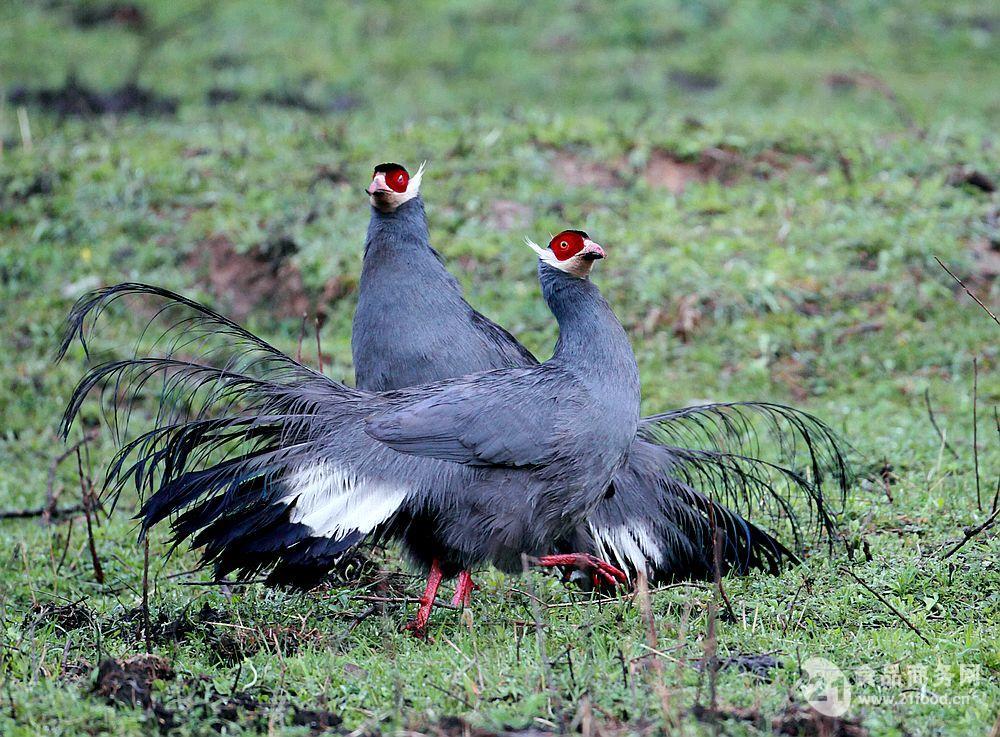 国家二级保护动物禽类