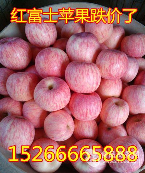 新春临近山东红富士苹果产地价各