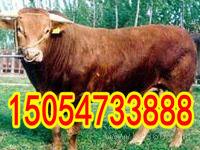 种牛犊多少钱一头