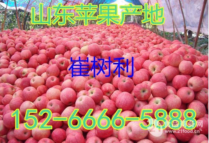 新年到来山东红富士苹果产地价格
