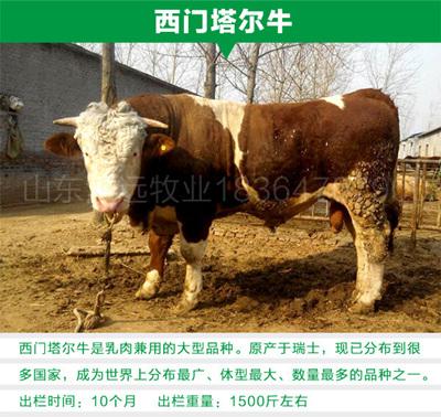 小肉牛多少钱一头