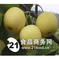 陕西砀山酥梨最新走势