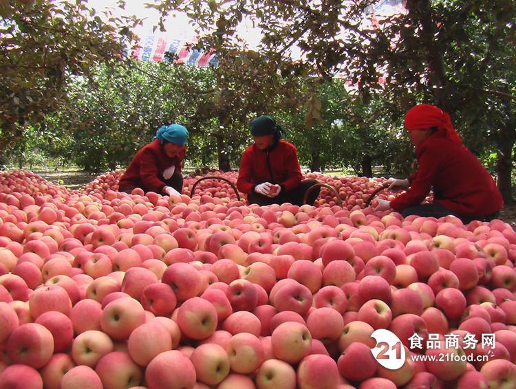 2017年红嘎啦苹果批发行情今日红嘎啦苹果产地批发价格