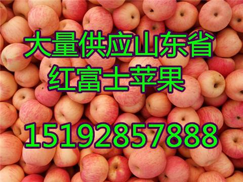 最新广东潮州红富士苹果价格 广东省苹果批发价格