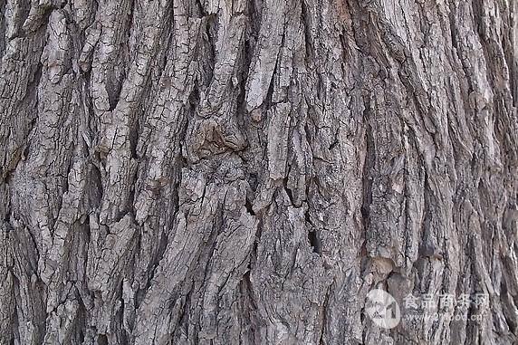 榆树皮提取物 春榆提取物 榆树皮粉 榆树皮提取物厂家