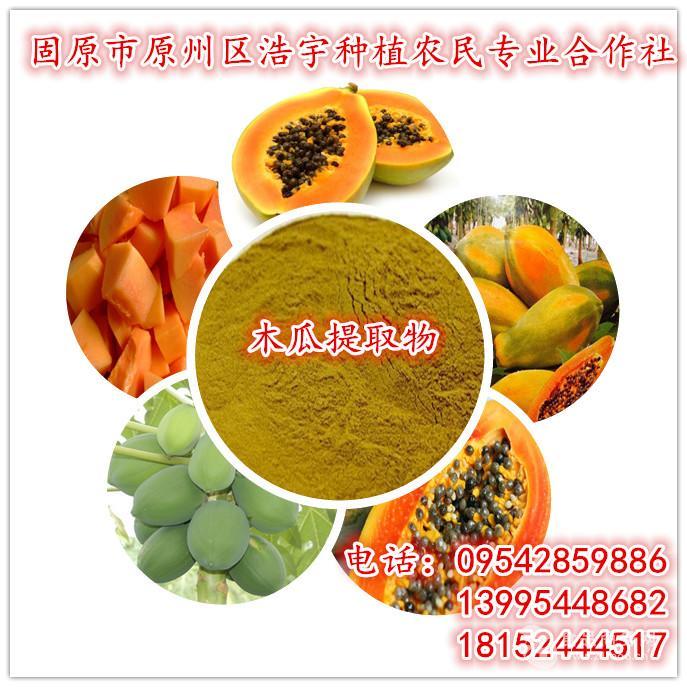 厂家现货供应木瓜提取物 木瓜速溶粉包邮 木瓜酵素粉