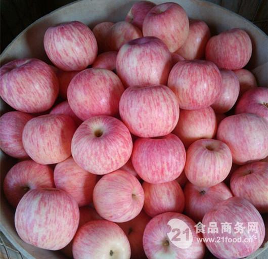 山东省红富士苹果最新价格