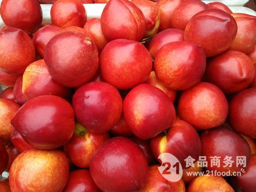 现在山东油桃价格 大棚油桃价格行情
