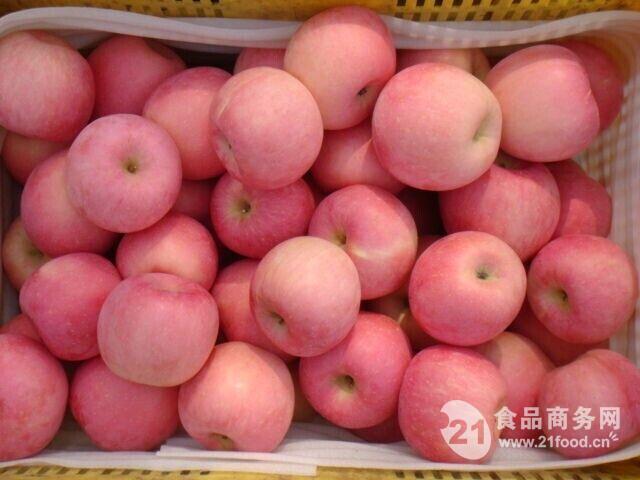 山东苹果产地价格