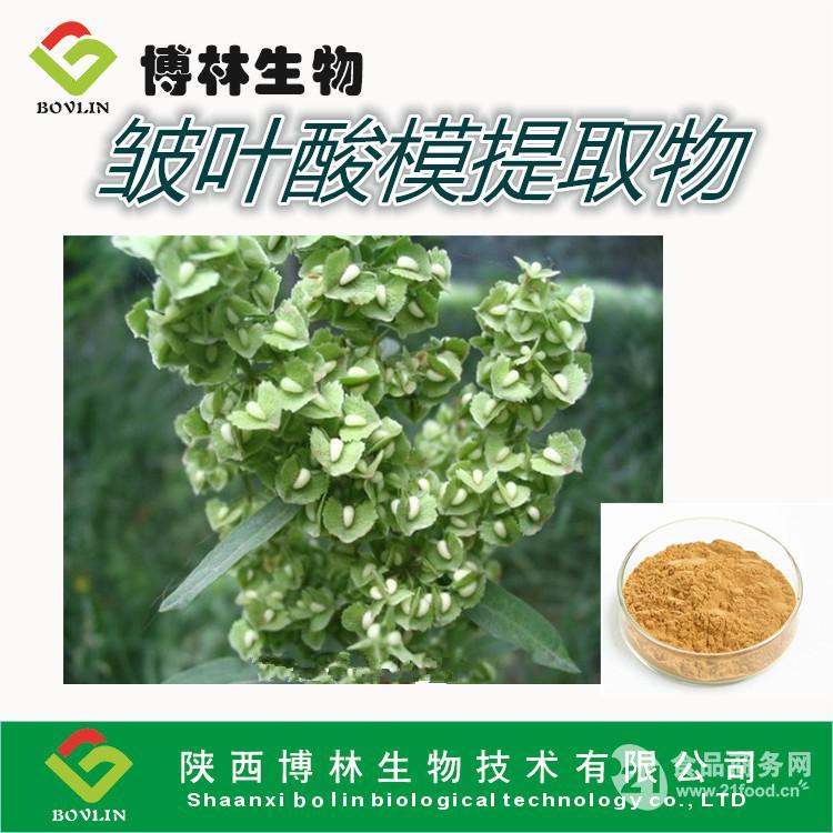 包粽子的叶子箬叶-中国 浙江杭州-千岛湖 天然 箬叶