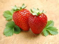 草莓提取物 多糖