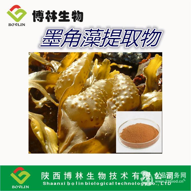 墨角藻提取物 10:1  美白祛斑