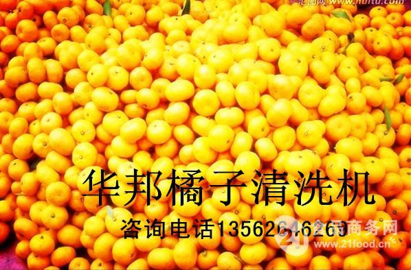304橙子清洗机 牛蒡清洗机 价格华邦