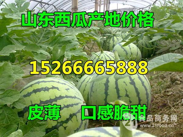 西瓜产地批发基地!0.5元一斤!!